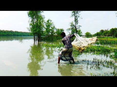 Cast Net Fishing at the River with beautiful natural | River Fishing by Daily Village Life (Part-02)