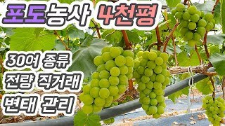 충주 포도농사 1등 농장 견학-귀농귀촌 정보