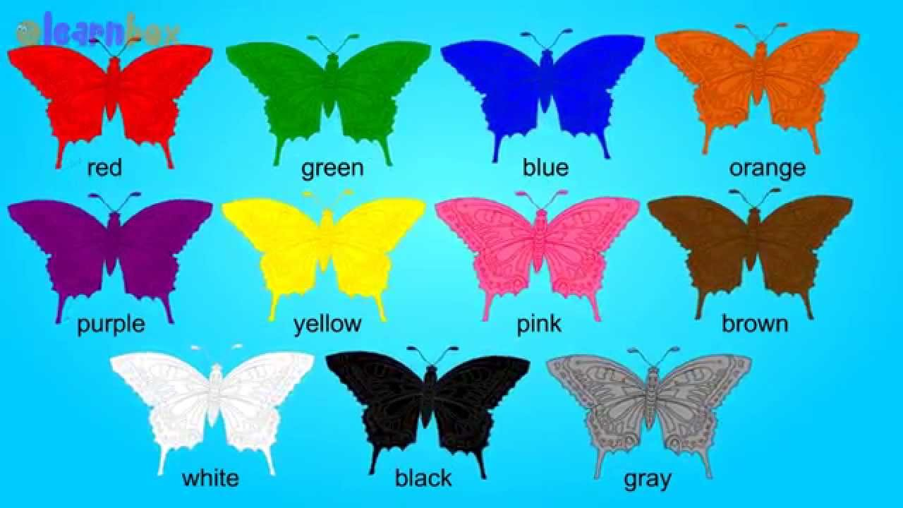 Butterfly Colors Song Learning Color Butterfly for Kids  YouTube