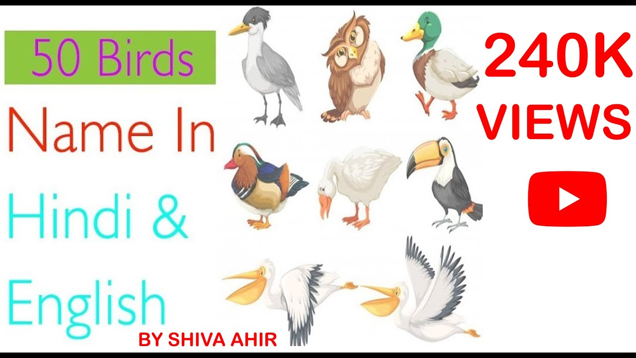 50 Birds Name In Hindi And English For Kids Learning With Picture Daily Creative Youtube