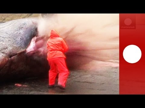 Explosión de una ballena en las islas Feroe