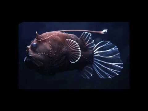 Strangely Beautiful Deep Sea Creatures