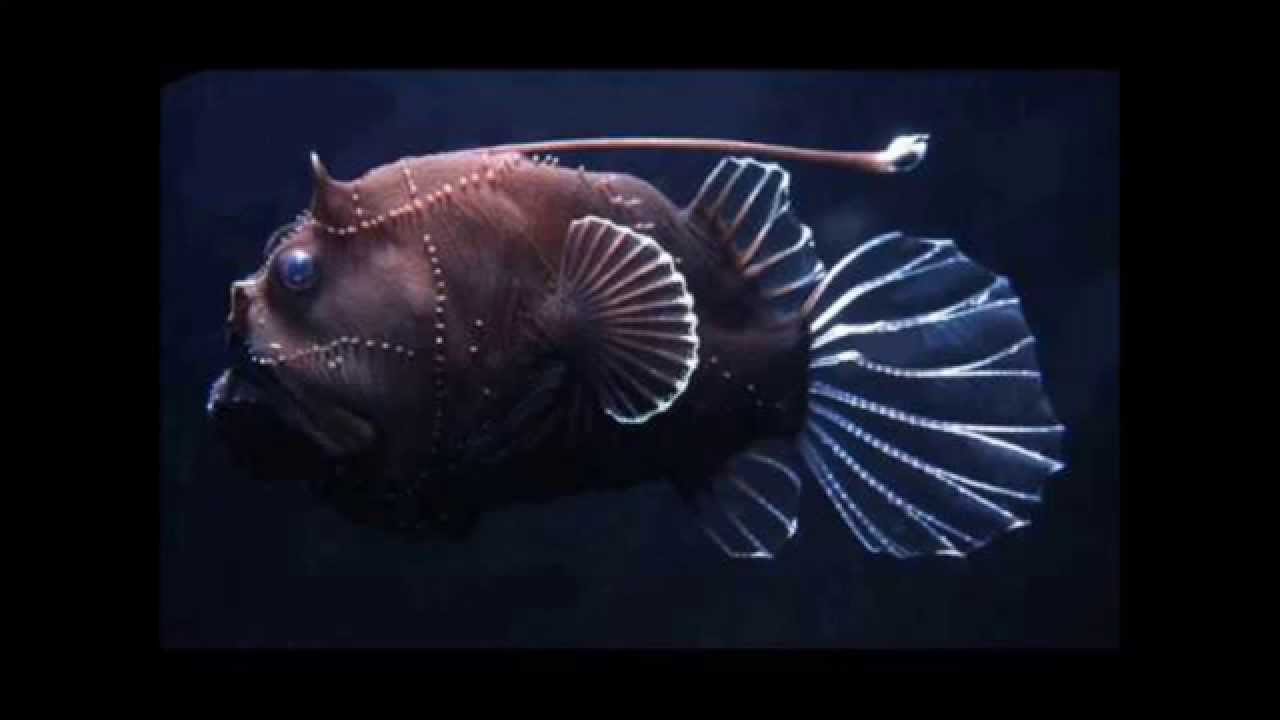 strangely beautiful deep sea creatures youtube