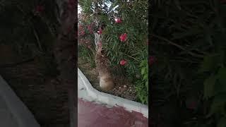 Видео отзыв о отеле Elysium Elite Hotel SPA 4 Турция Сиде Кызылот