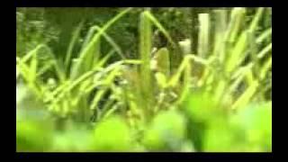 Ponmuraliyoothum katte-Aaryan film song