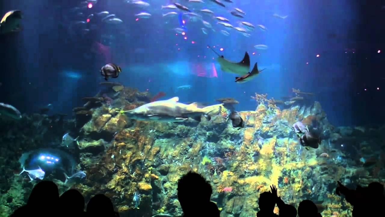 Grand aquarium aqua city ocean park hong kong for Achat grand aquarium