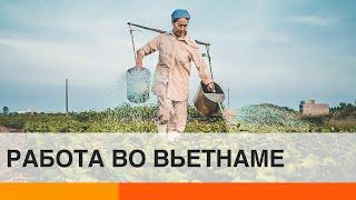 Работа для иностранцев во Вьетнаме: эмигранты о жизни за границей – ICTV