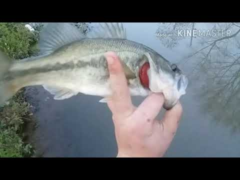 Catching nice bass on a jerk bait for the first time
