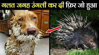 बाप–बाप होता है गलत पंगा ले लिया 10 Times Animals Messed With The WRONG Opponent.