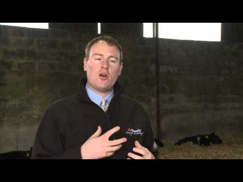 GAIN  Ruminant Feeds - Protect Against Pathogenic Bacteria & Increase Growth Rates