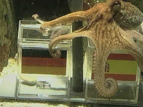 Paul The Psychic Octopus Makes World Cup Winner Prediction Youtube