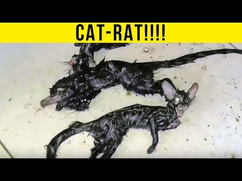 5 Nightmare Creatures Caught Outside of People's Homes!