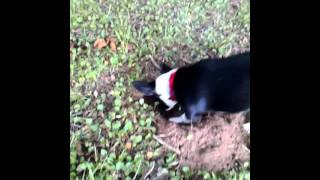 Scraps the mole catcher