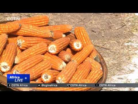 Zimbabwe embarks on partnerships to boost food security