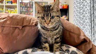 朝起きたら布団の中に子猫がいたのでしつこく密着してみましたw