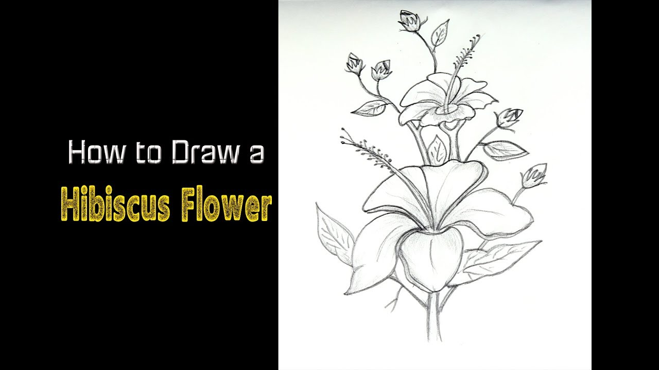 How To Draw A Hibiscus Flower Step By Step Easy Flower Drawing