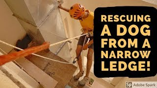 Dog Stuck on a Ledge... RESCUED! | Animal Rescue India