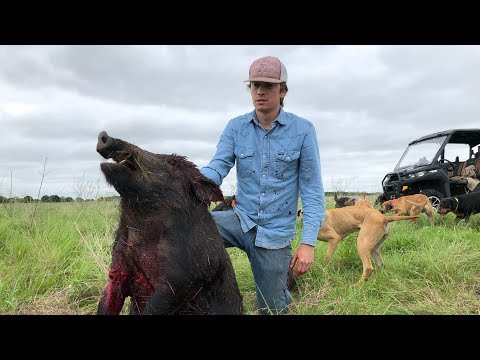 Hunting Wild Hogs In Texas With Dogs | WARNING GRAPHIC