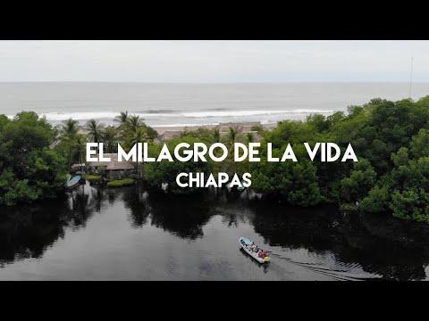 El milagro de la vida en las playas de Chiapas - Defensa de la tortuga marina en Barra de Zacapulco