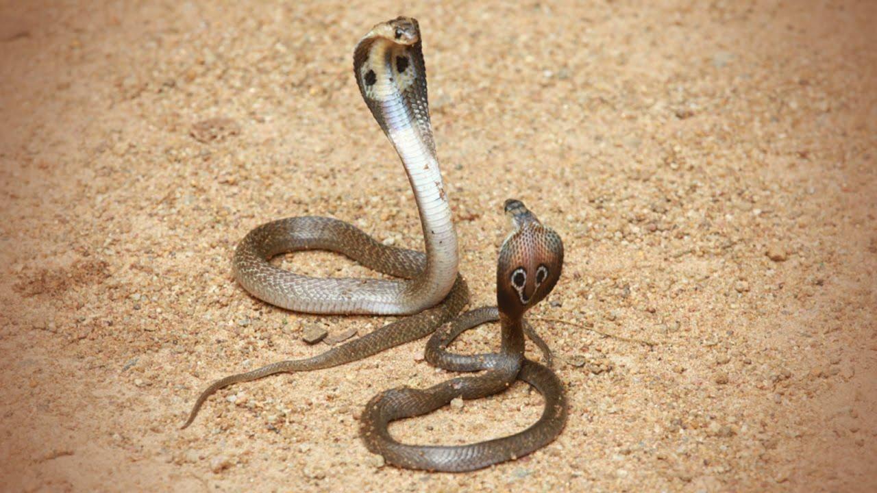 Yoshi x Twilight - Snake Love by IcePony64 on DeviantArt