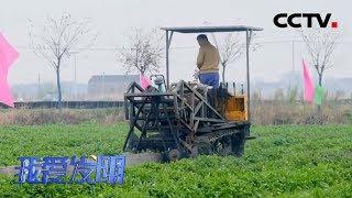 《我爱发明》 20200113 白芹排排壅 CCTV农业
