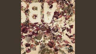 Predawn - 霞草