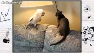 Попугай гопник и кот!!!
