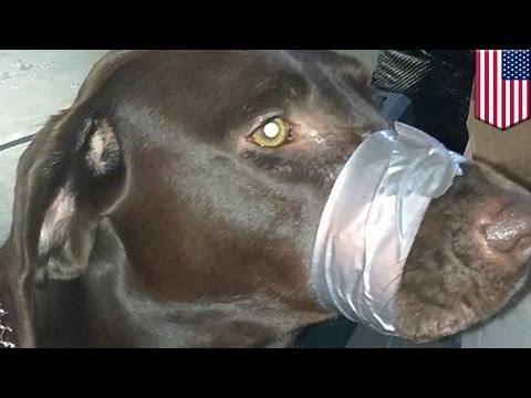 Женщина заклеила пасть собаке, чтоб не лаяла