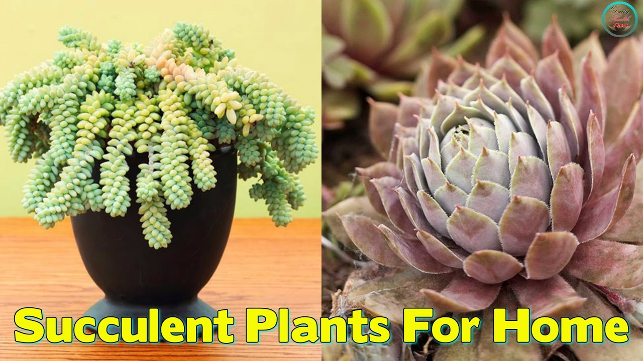 Top 10 Succulent Plants For The Home Youtube