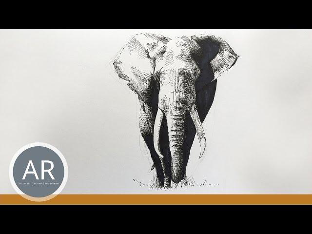 Tiere zeichnen lernen. Elefanten zeichnen. Mappenkurs Kunst