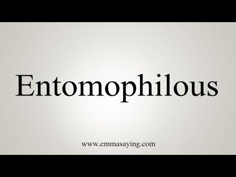 How To Pronounce Entomophilous