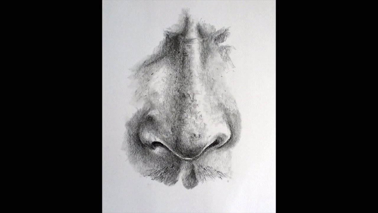 How to Draw a Realistic Nose - YouTube