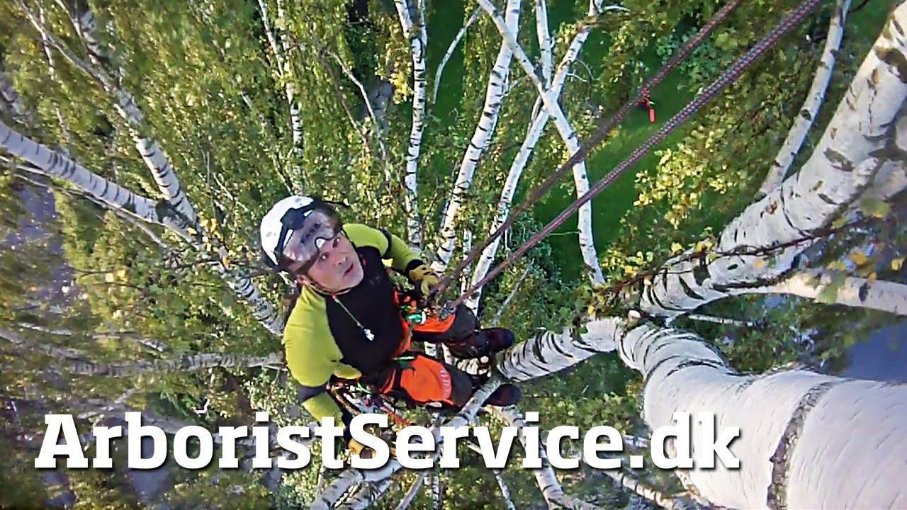 Petzl Zigzagging Through A Tree Removal Tree Climbing