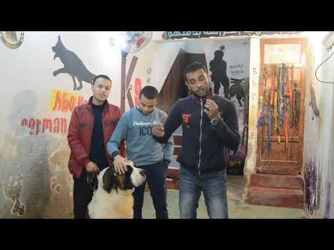 وداعا مايلو / الكلب دا كان عامل مشاكل وكمان موت مشمش بس والله هايوحشنى