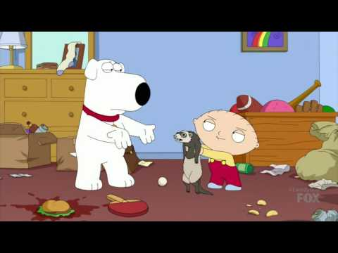 Stewie and the Ferret