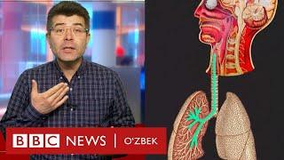 Коронавирус  юққандан сўнг, танамизда нималар қилади?  Ўзбекистон  O'zbekiston koronavirus