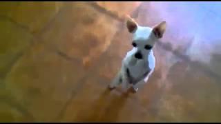 Смешное Видео Танцующая Собачка(Смешное Видео Танцующая Собачка. Собака танцует. Прикольный танец собачки. Подписывайтесь на наш канал..., 2014-11-13T00:14:55.000Z)