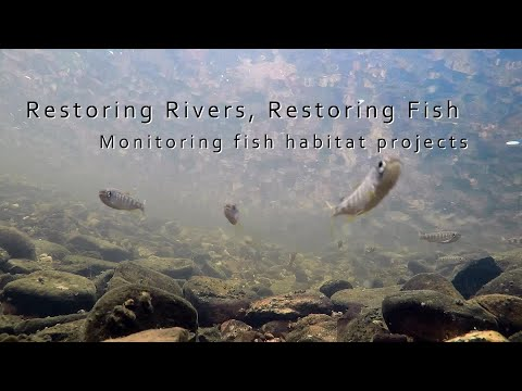 Restoring Rivers, Restoring Fish: Monitoring Fish Habitat Projects