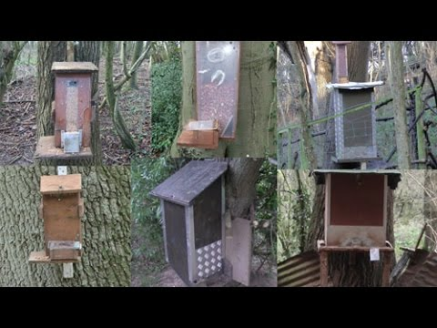 Pest Control With Air Rifles - Squirrel Shooting - Feeders!