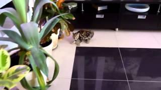 Смешное видео! Коты танцуют!