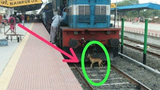 DOG VS TRAIN :  Silly dog front of train : nainpur junction