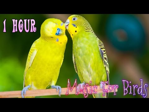 1 Hour || Calming Music For Birds || Budgies || Relaxing Music to Tame your Birds #4