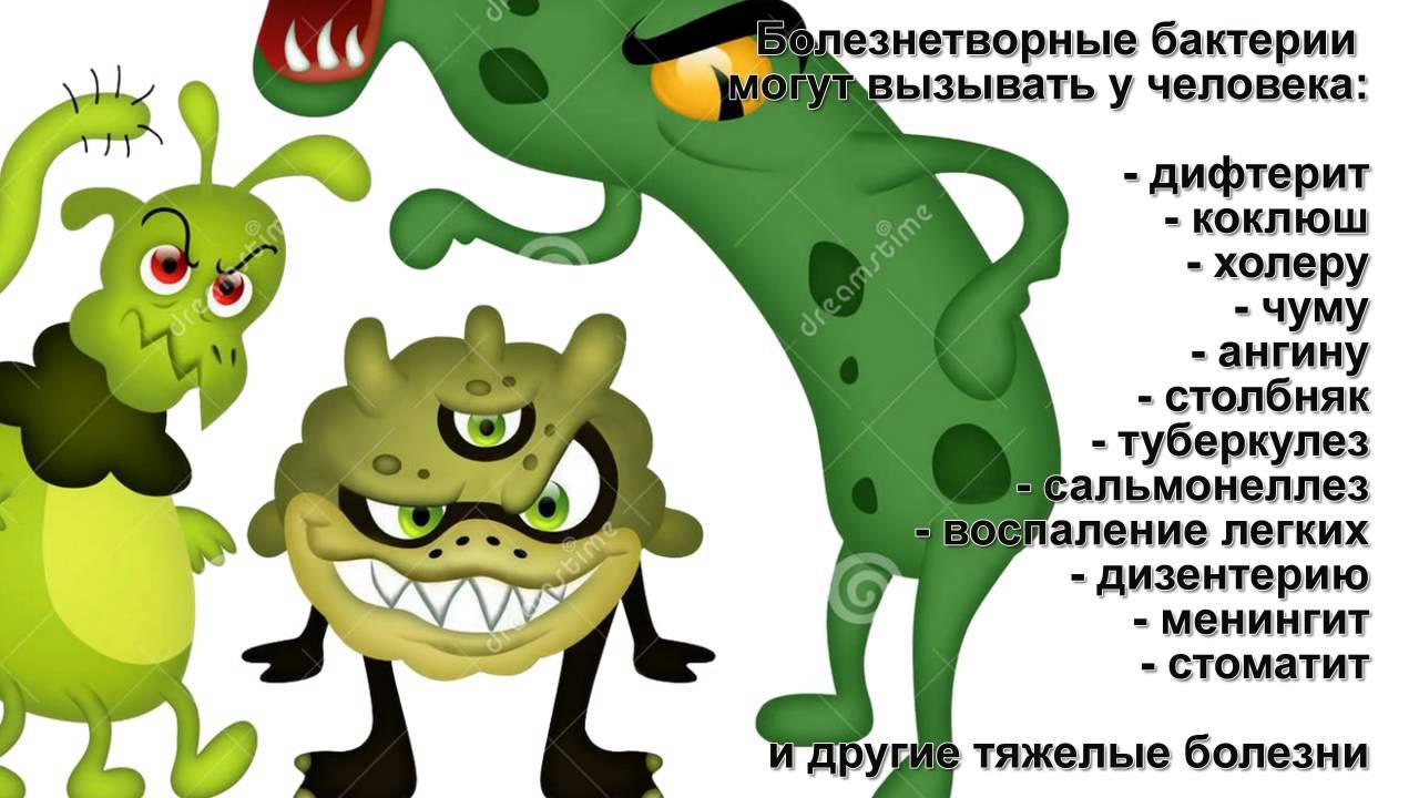 Слайд-шоу для школьников на заказ - Бактерии - фотофильм ...