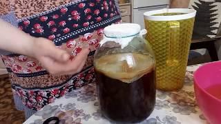 Чайный гриб. Секреты приготовления и уход