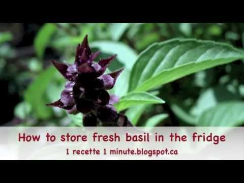 How To Store Fresh Basil In The Fridge Keep Preserve Food Kitchen Tips Tricks