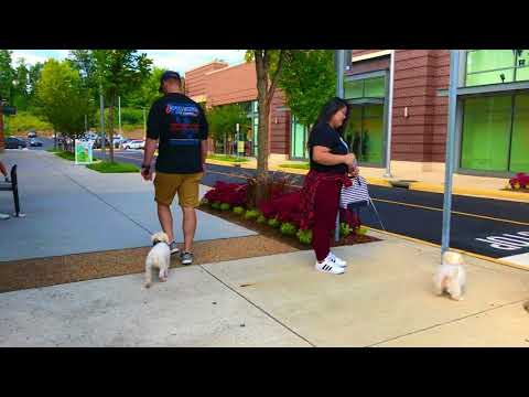 Skittish Small Dog, Charlie!  Electronic Collar Training   Off Leash K9 Training