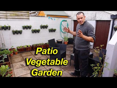Growing Patio Vegetables QUICK and EASY!