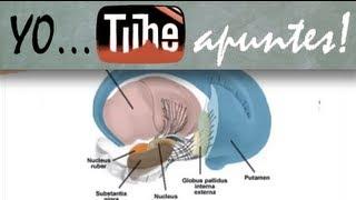 Fisiología del sistema nervioso. Motor. Ganglios basales (1)