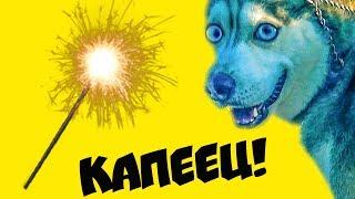 Я БОЮСЬ БЕНГАЛЬСКИХ ОГНЕЙ Хаски Бандит Говорящая собака