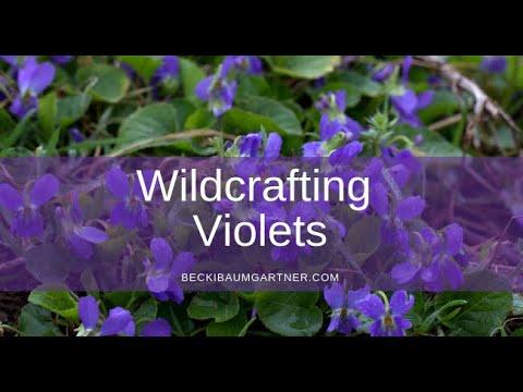 Violet  (Viola odorata) ~ LuminEarth